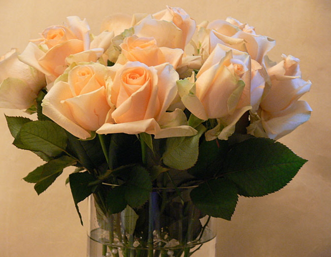 Роза аваланж пич фото