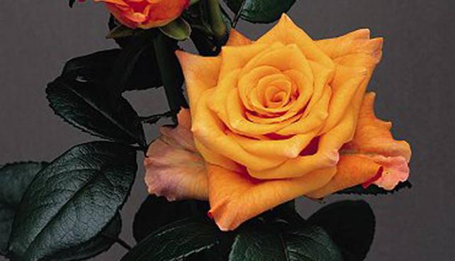 Женская рука держащая цветок