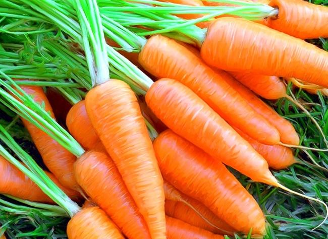 Сорта моркови: какой выбрать?