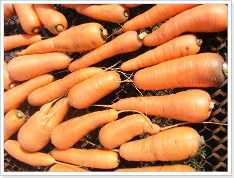 Сушка моркови на сетке