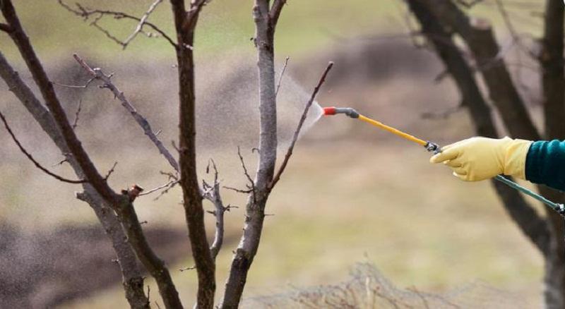 Когда и чем брызгать фруктовые деревья