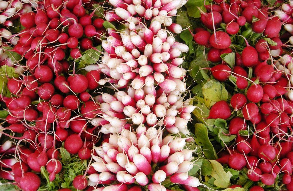 Редис - незаменимый источник витаминов