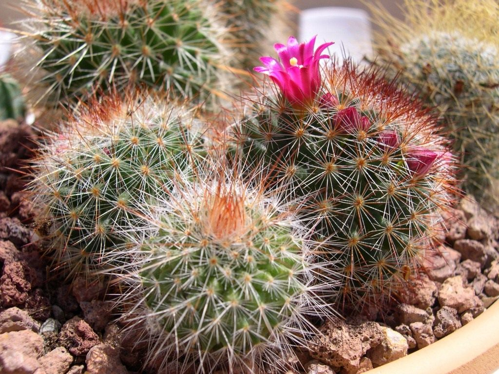 Пустынные кактусы - аскетичная красота