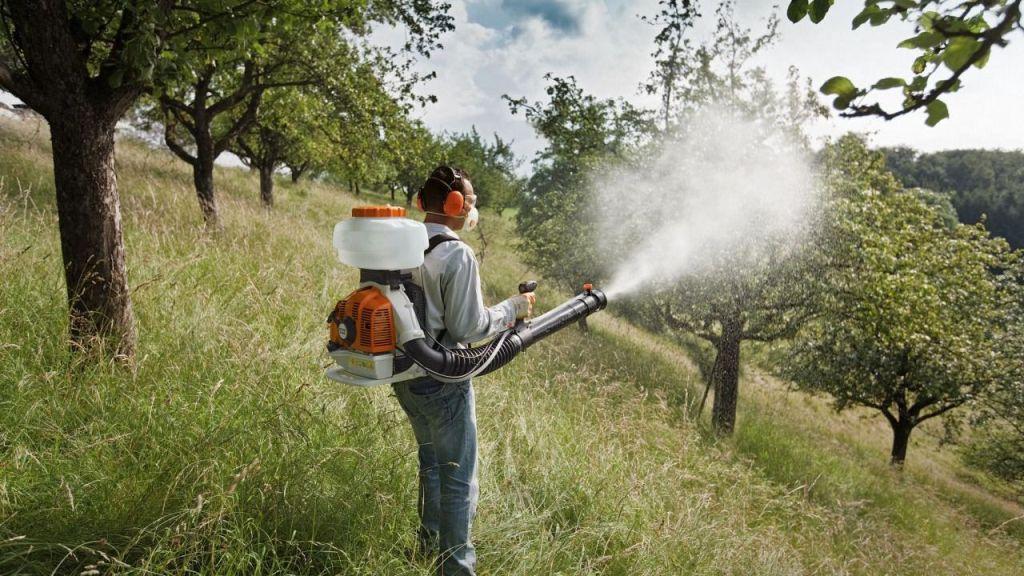 Почему так важно готовить деревья к весне?
