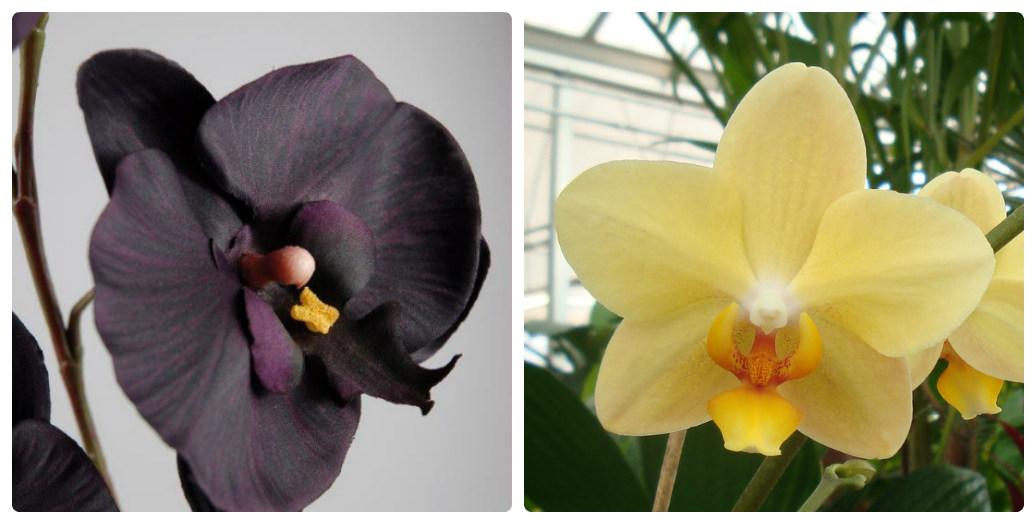 Орхидеи - уход за орхидеями