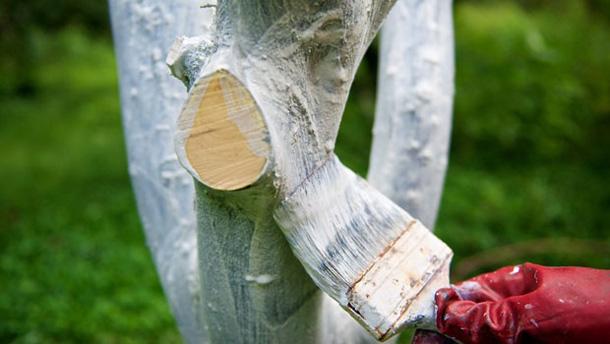 Когда, как и чем белить деревья?