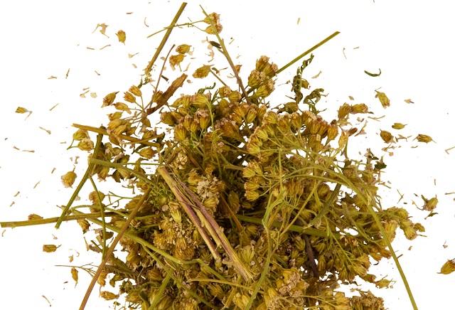 Тысячелистник - лекарство в моем саду