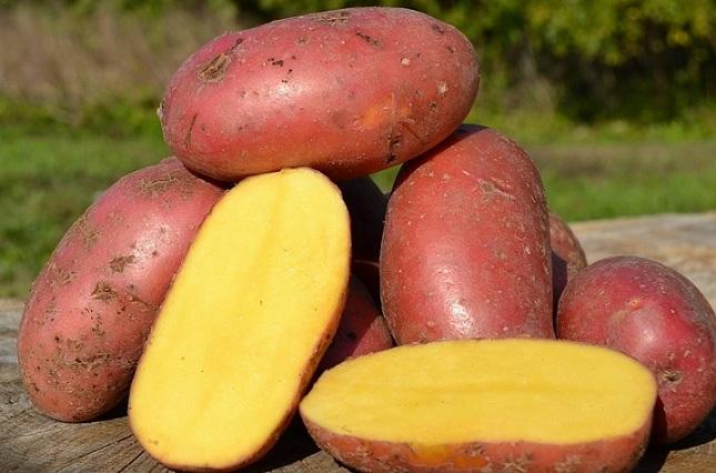 Картофель из Скандинавии: что может быть лучше?