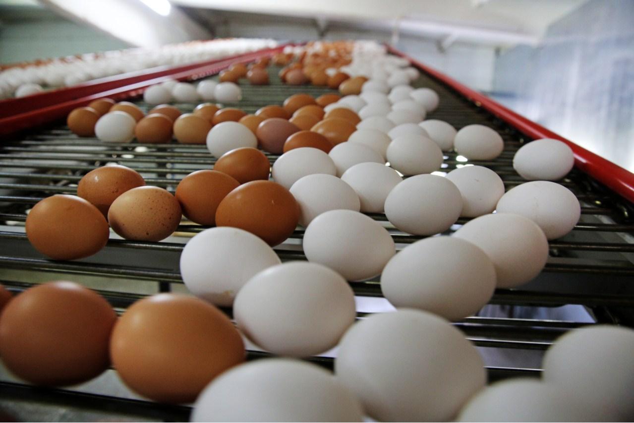 Есть или не есть: можно ли пить сырые куриные яйца?