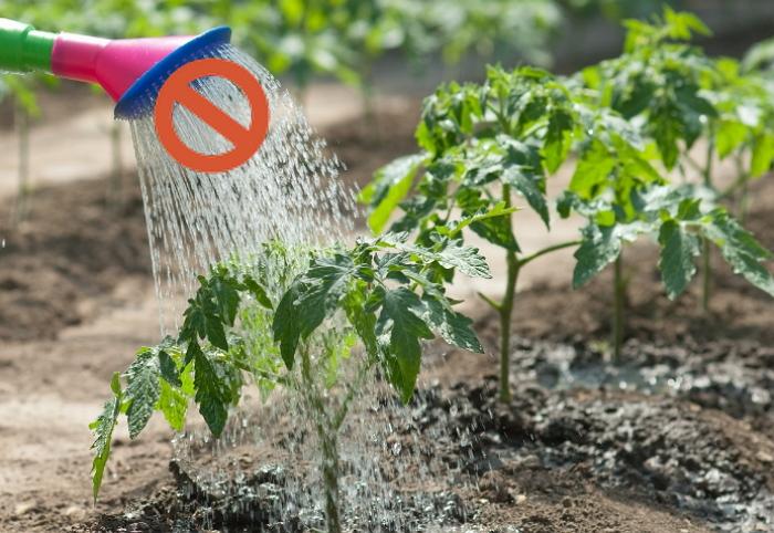 Овощи без полива