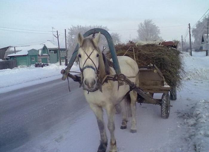 Подковка лошади зимой