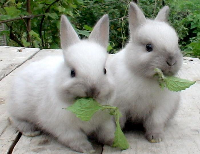 Порции кормления кроликов