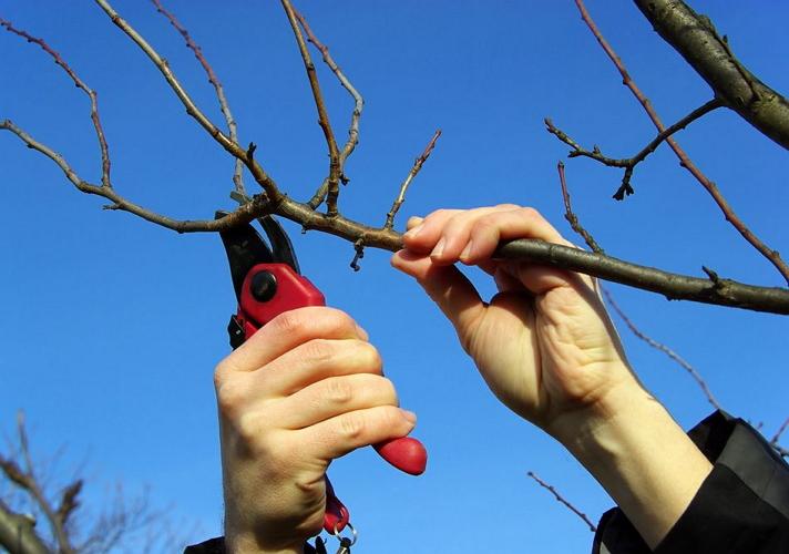 Обрезать деревья