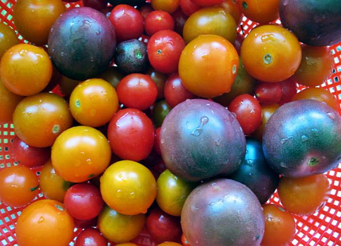 pomidor_raznie