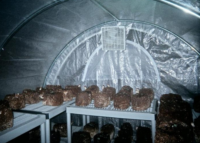 Помещение для выращивания шампиньонов своими руками 14