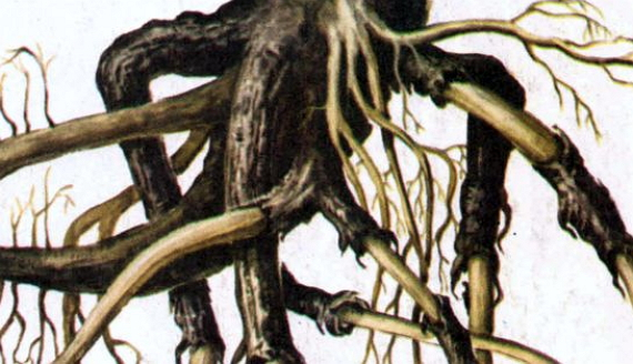 Обморожение корней дерева