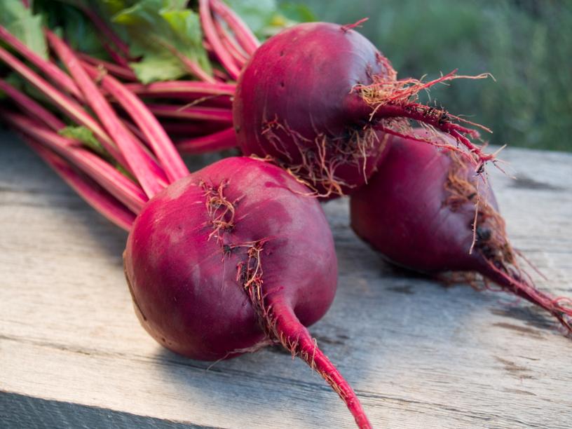 Свекла столовая — древняя целебная овощная культура