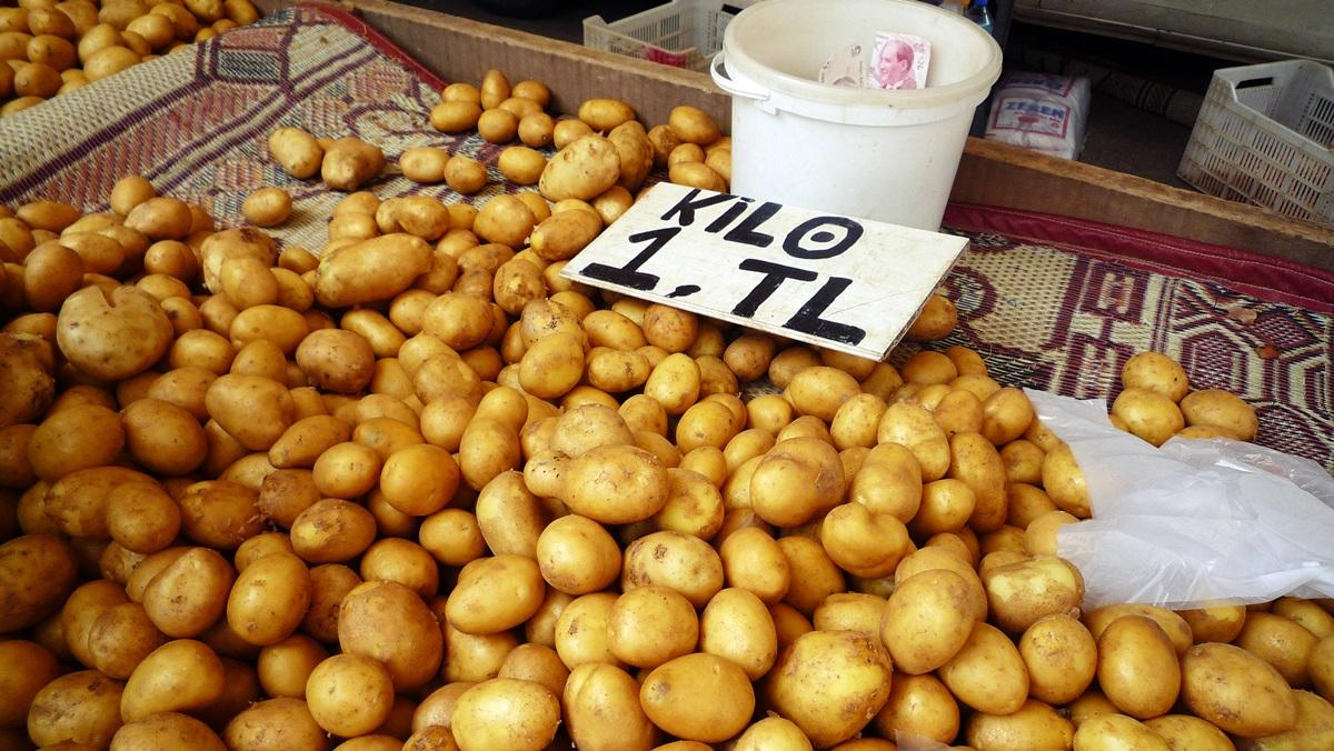 Какие сорта картофеля выбрать для выращивания?