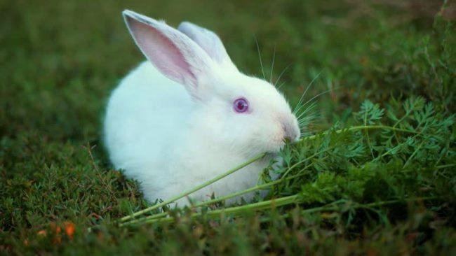 Чем кормить кроликов: все про корма, нормы и порции