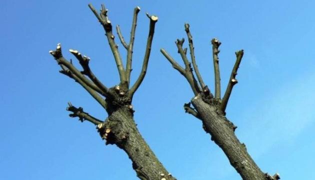 Обрезка старых деревьев с запущенной кроной