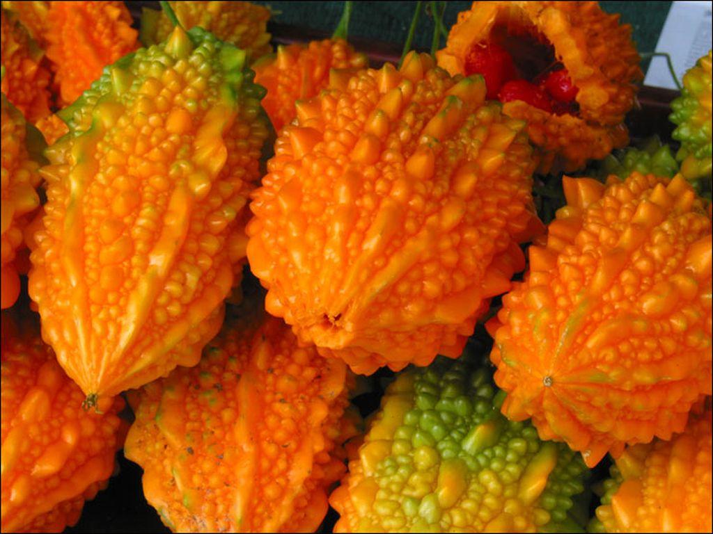 Выращивание момордики – украшение любого сада