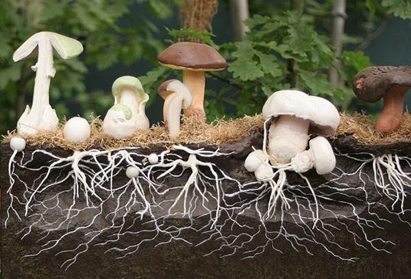 Как вырастить лесные грибы в саду