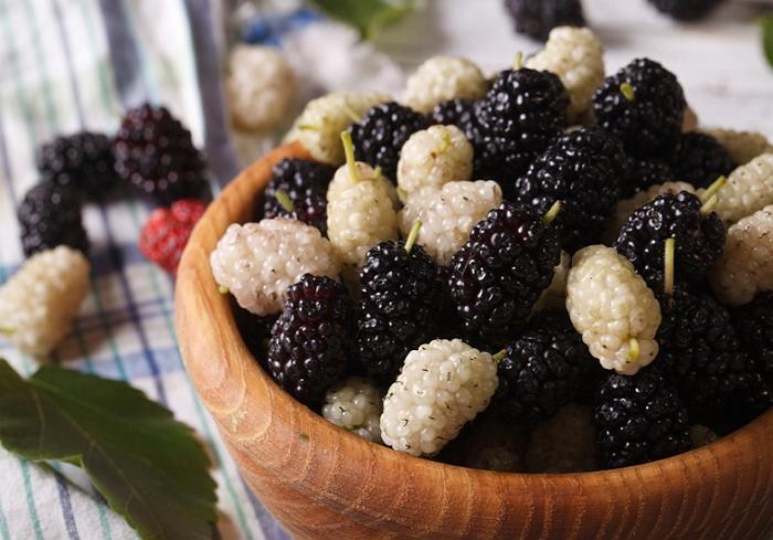 Полезные ягоды шелковицы