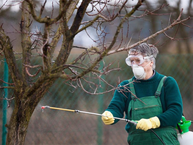Медный купорос - применение в садоводстве