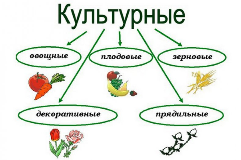 Культурные растения: от А, до Я