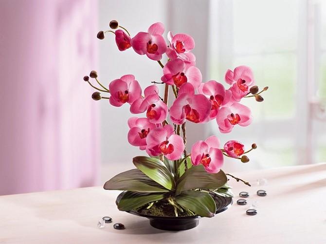 Все об уходе и выращивании орхидеи