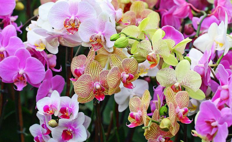 Самые яркие виды орхидей