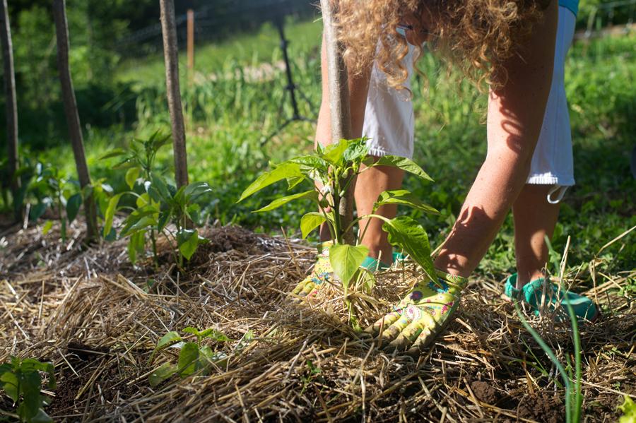 Мульчирование почвы — это важный агротехнический прием