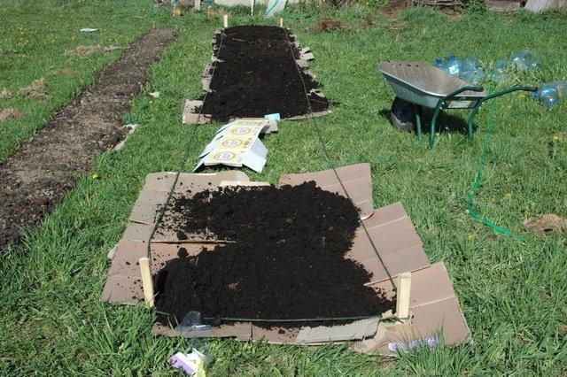Мульчирование клубники как залог великолепного урожая