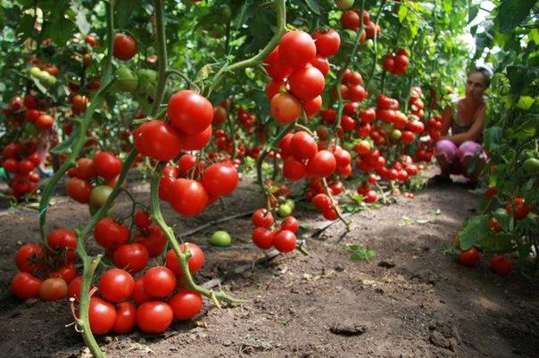 Как вырастить овощи без полива в засушливых регионах
