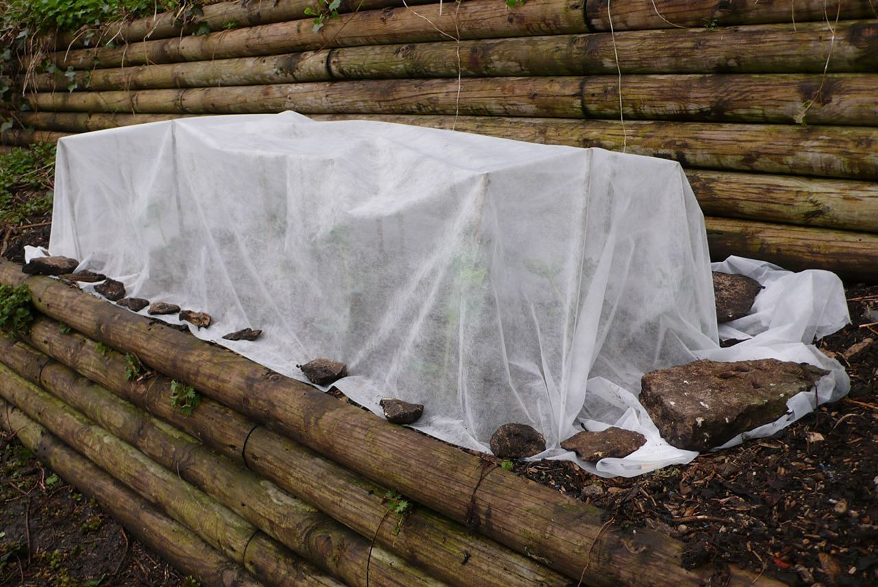 Уход за клематисом осенью и подготовка к зиме