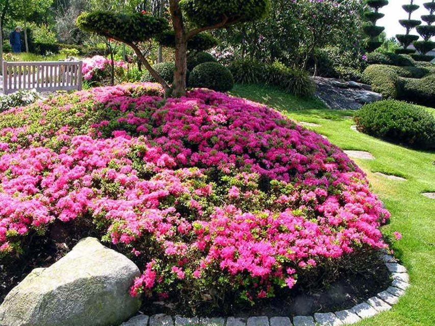 Азалия садовая - посадка и уход за растением