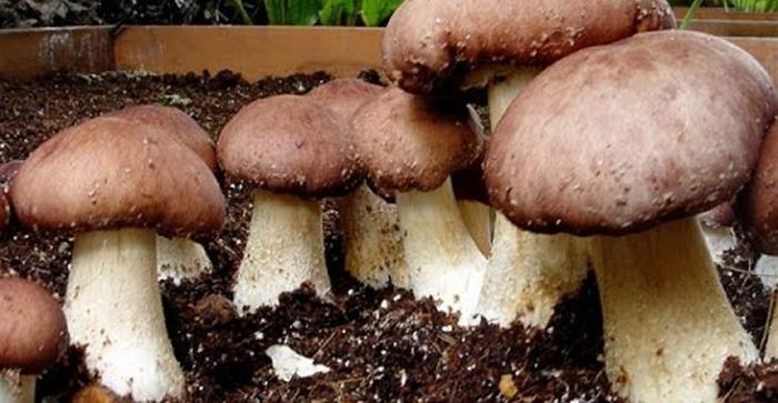 Выращивание грибов в домашних условиях: основные этапы
