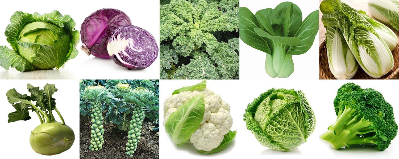 Виды капусты и ее сорта: характеристики, особенности