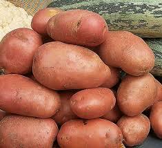 Картофель из семян: современная технология выращивания