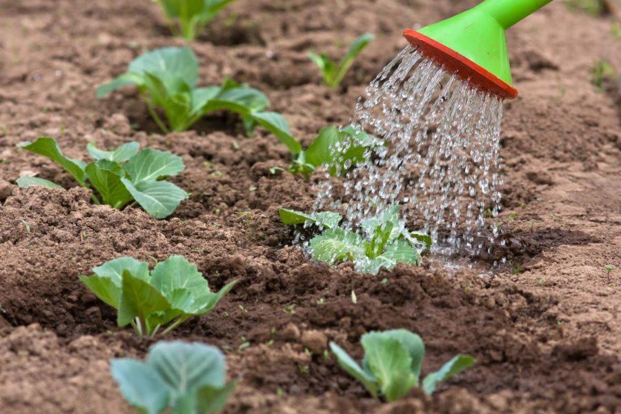 Поливаем семена и рассаду правильно:  чем поливать и в какое время