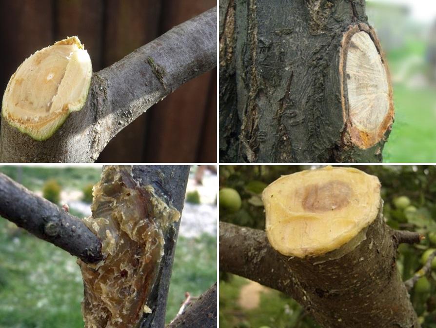 Обрезки яблонь осенью: лучшие техники для хорошего урожая