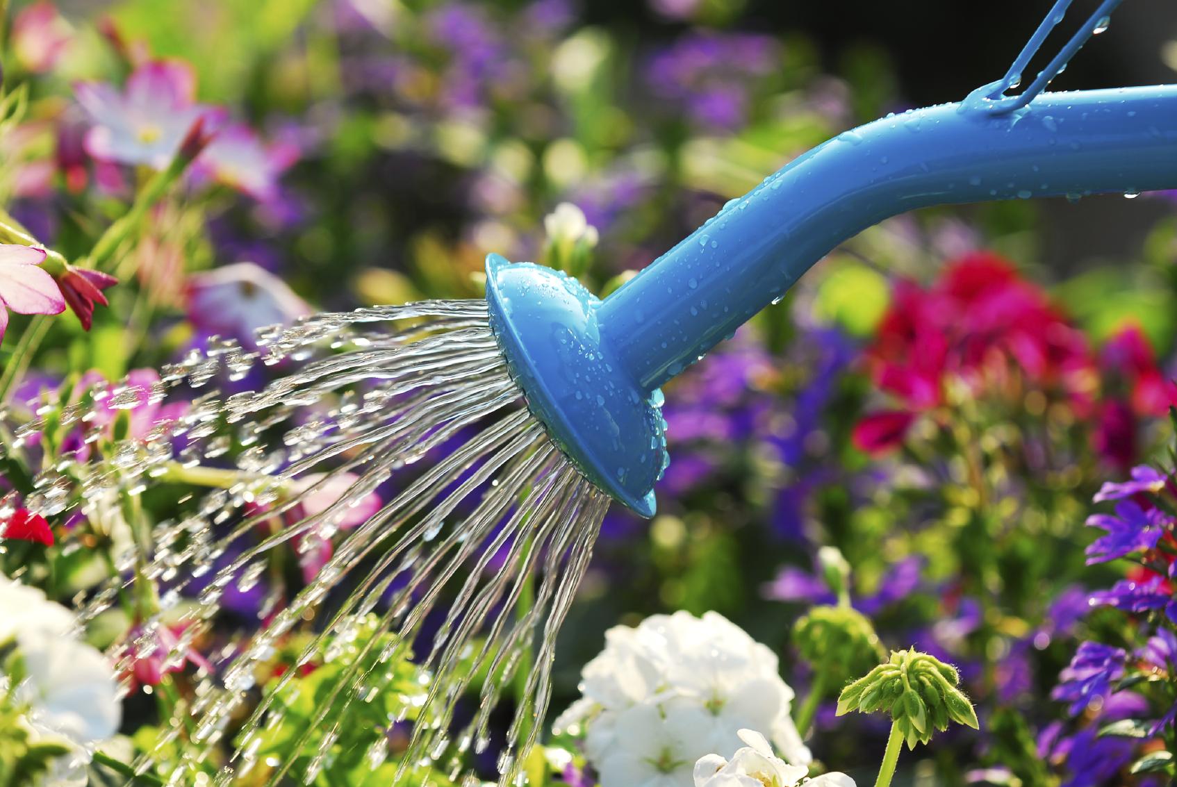 Китайская многолетняя гвоздика: секреты обильного цветения