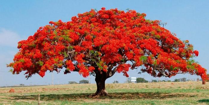 как вырастить уксусное дерево