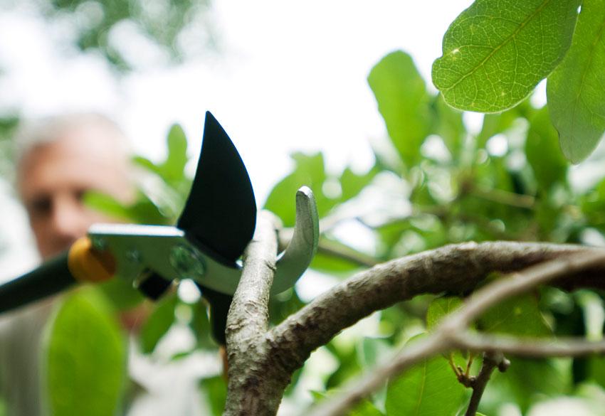 Сумах — эффектное и яркое уксусное дерево
