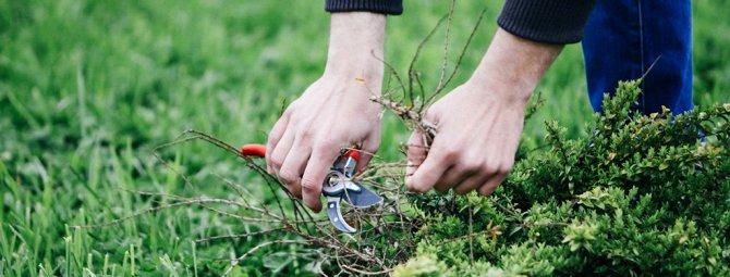 Борьба с сорняками: как выбрать лучшее средство