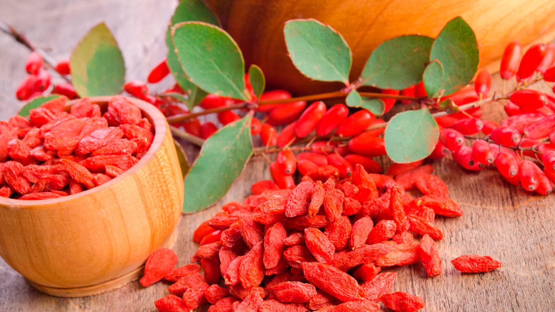Как вырастить ягоды годжи - полезные плоды