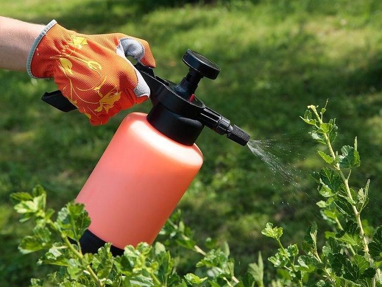 Инсектициды от вредных насекомых