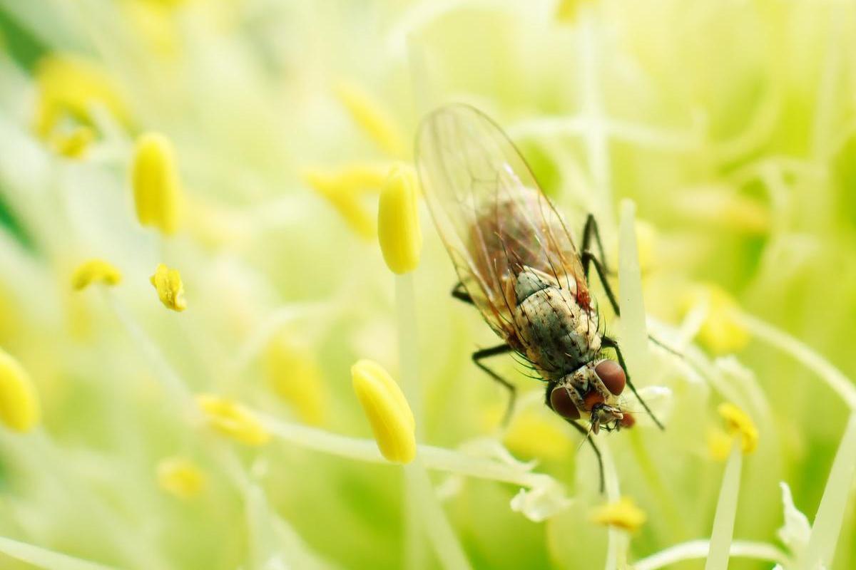 Борьба с луковой мухой на грядках, средства, методы и способы