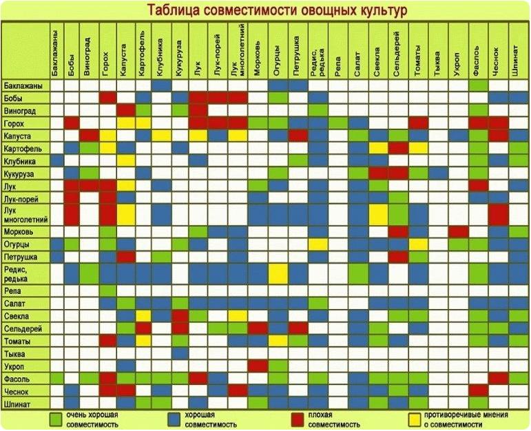 Таблица совместимости растений в саду. Правила посадки