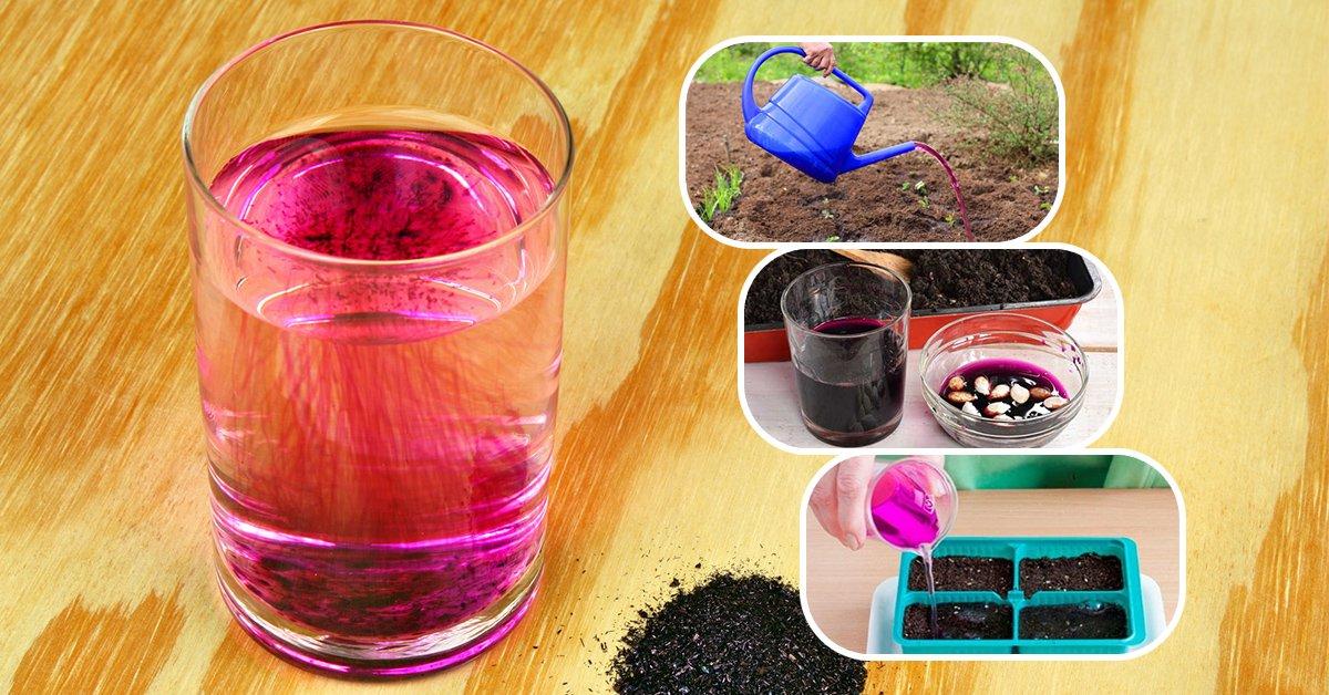Методы применения марганцовки для сада и огорода